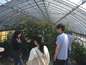 「ベビーコーンは、普通のトウモロコシの実が小さいうちに摘み取ってるんです」と説明する寺田社長