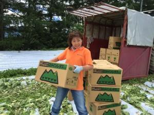 ロメインレタスの収穫のお手伝いをしてきました!