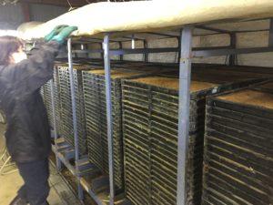 覆いをはぐると、25段に積まれた苗箱がズラーッと並んでいます
