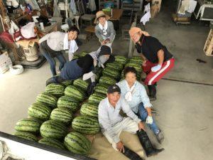 収穫した入善ジャンボ西瓜と