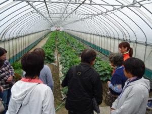 ハウス内の多種多様な葉物野菜について説明する従業員に次々と質問が飛ぶ