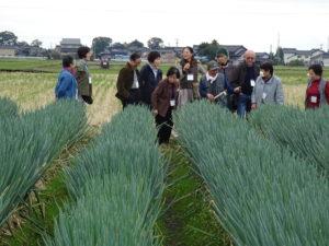 露地栽培のネギについて説明を受ける参加者たち