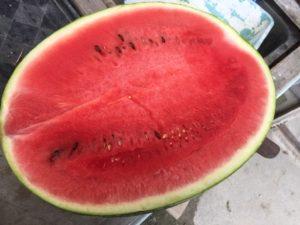 ご覧のとおり、ジャンボなラグビーボール型の西瓜です。 甘いよ甘いよ~~~。